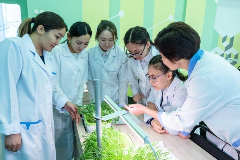 2019-09-01,哈萨克斯坦,库斯塔奈 水栽法 女小学生和一位老师白色外套的在生物或植物学课 学校 库存图片