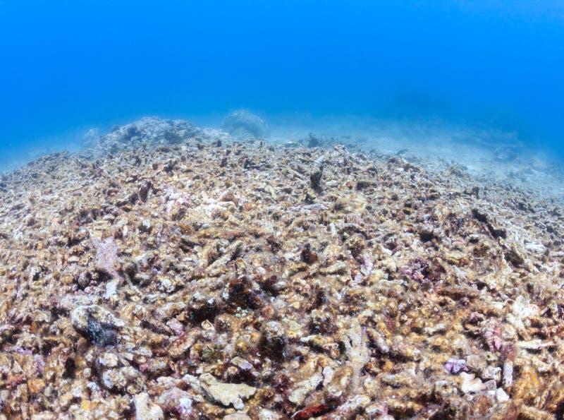死,被漂白的珊瑚礁 免版税图库摄影