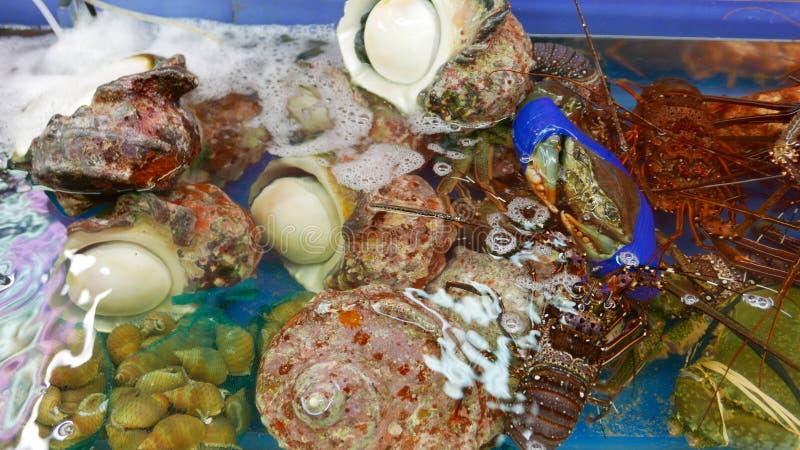 Download 贝类,龙虾,壳 库存图片. 图片 包括有 龙虾, 贝类, 展望期, 生气勃勃, 原始, 膳食, 新鲜, 食物 - 59110033