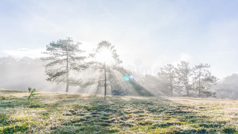 18, 2月 2017 - 光芒和雾在杉木森林大叻Lamdong,越南 免版税图库摄影
