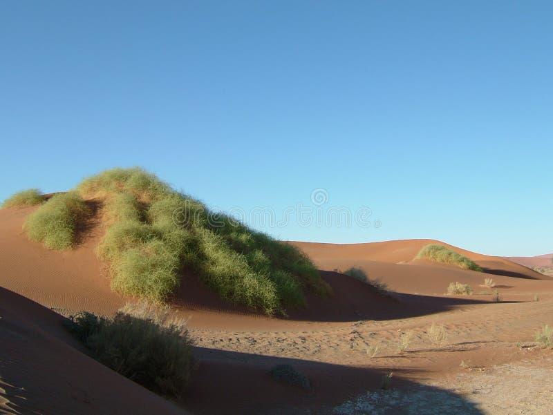0沙漠namib 库存照片