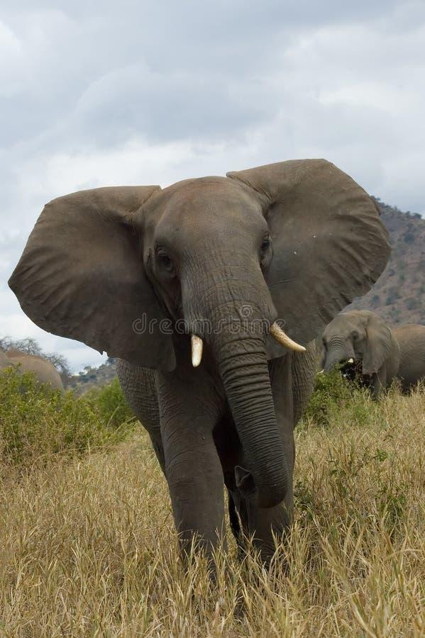 0 ελέφαντας στοκ φωτογραφίες με δικαίωμα ελεύθερης χρήσης