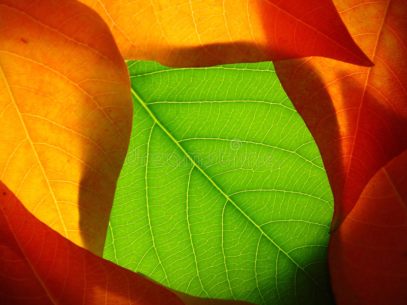 001 leaves royaltyfri fotografi