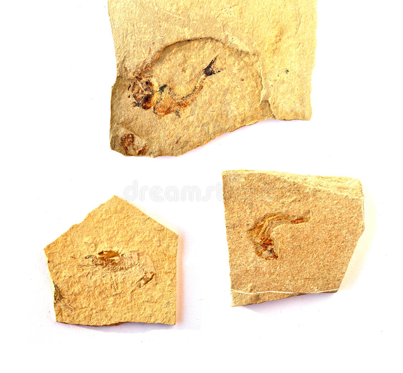 0014块化石 免版税库存照片