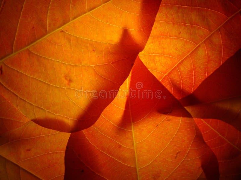 003 leaves royaltyfria bilder