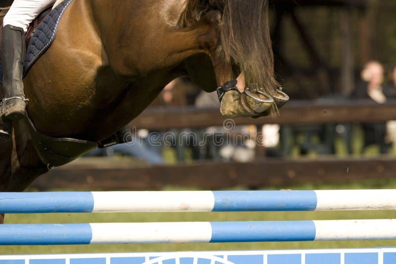 004匹马跳 免版税图库摄影