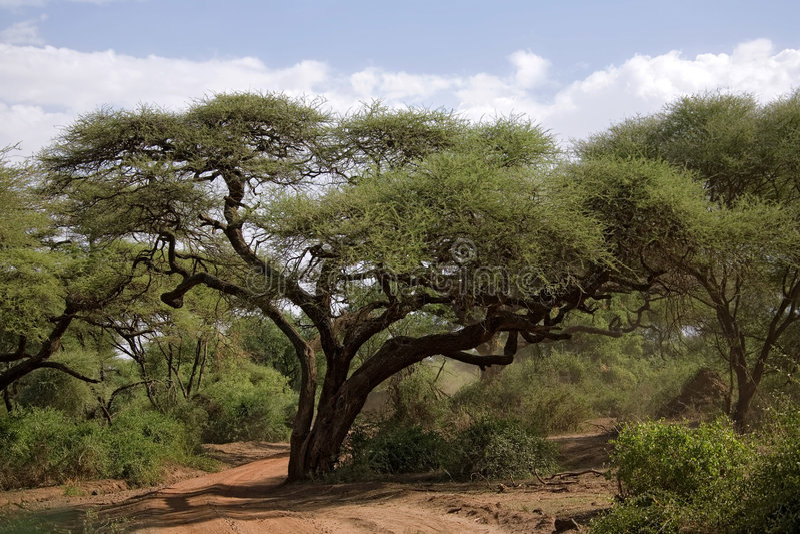004 Afryce krajobrazu fotografia royalty free