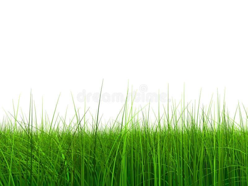 005 9000 засевают небо травой стоковые изображения rf