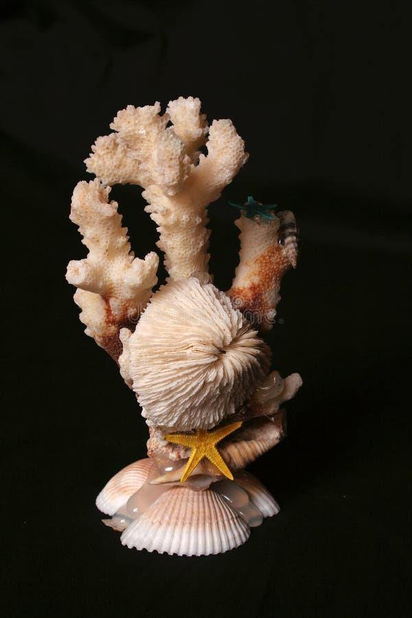 01个珊瑚贝壳 免版税库存图片