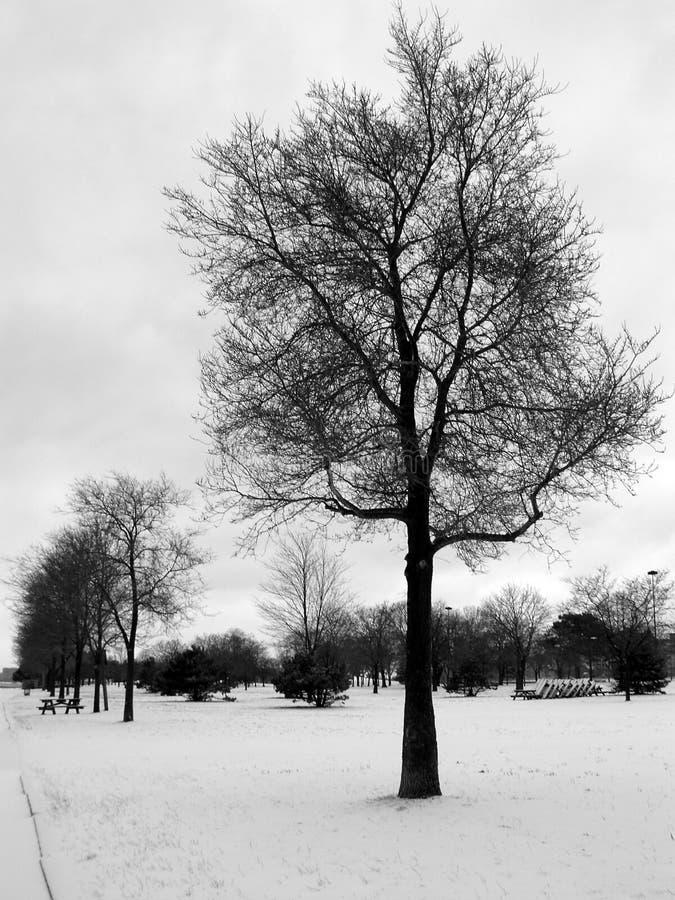 01个结构树冬天 库存照片
