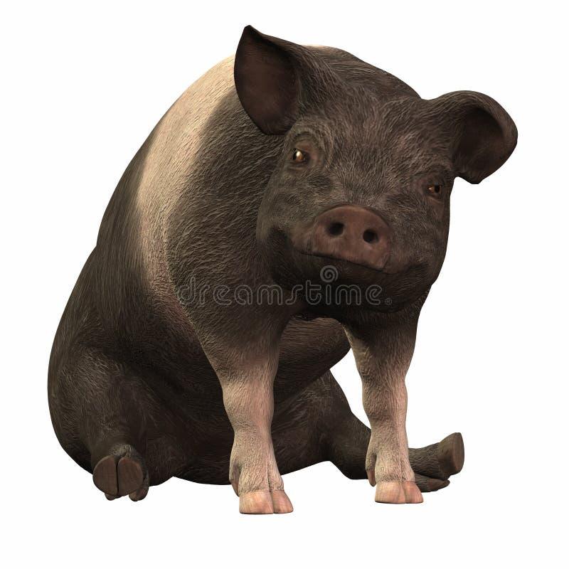 Download 01圈状的piggie 库存例证. 插画 包括有 粉红色, 微笑, 敌意, 大块, 投反对票, 哺乳动物, 猪肉 - 3668480