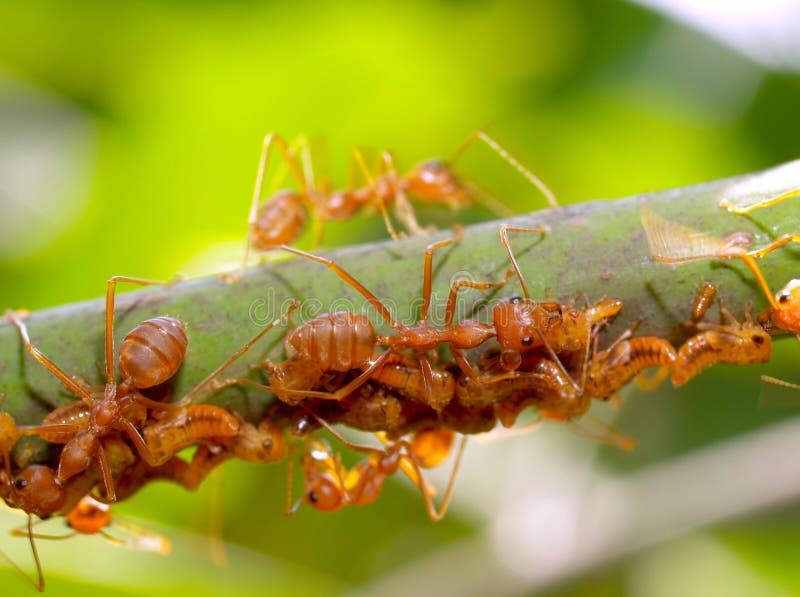 01蚂蚁 免版税库存图片