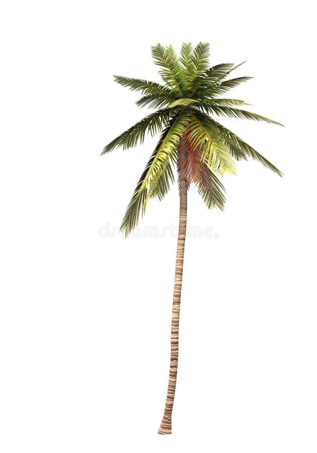 01 3d kokosowy drzewo ilustracja wektor