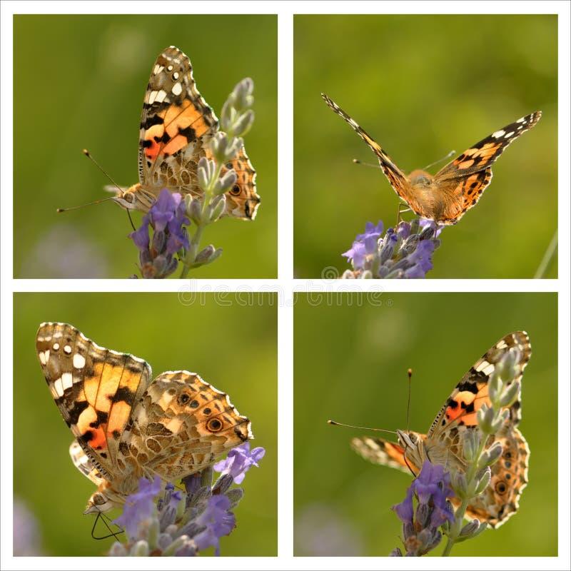 01 4只蝴蝶 库存图片