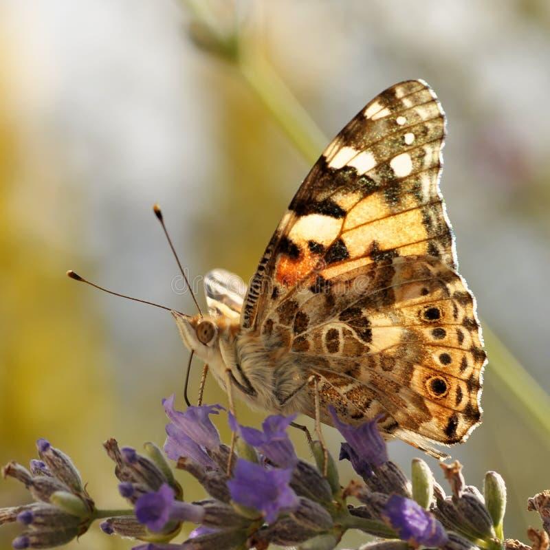 01 4 πεταλούδες στοκ φωτογραφία