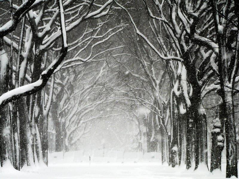 01 häftig snöstorm Central Park arkivbild