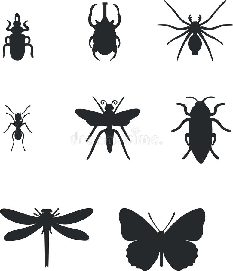 01 insekta set ilustracja wektor
