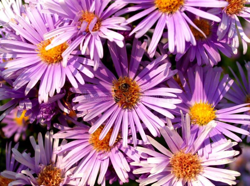 01 kwiat obraz stock