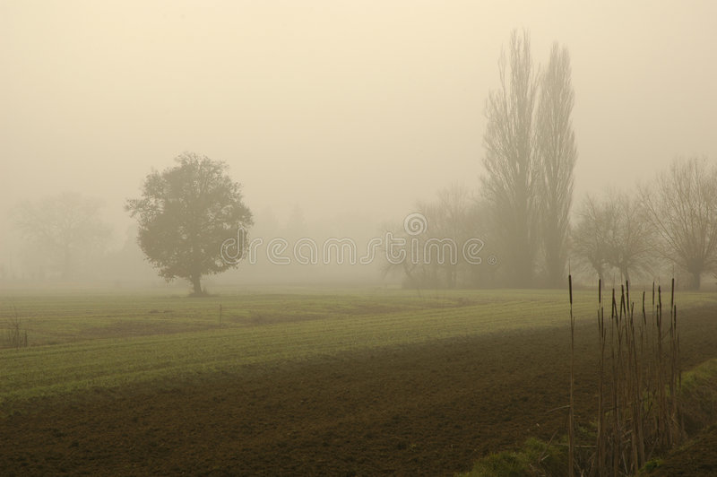 01 mgła. obraz stock