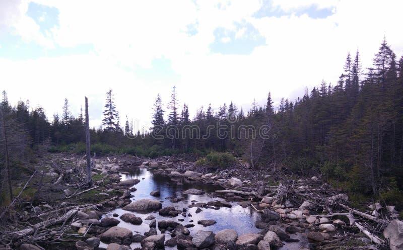 011 - Parc de la Gaspésie national : Laque Américains aux. images libres de droits