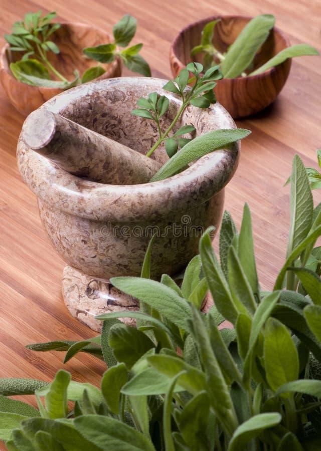 015 herbs στοκ εικόνα