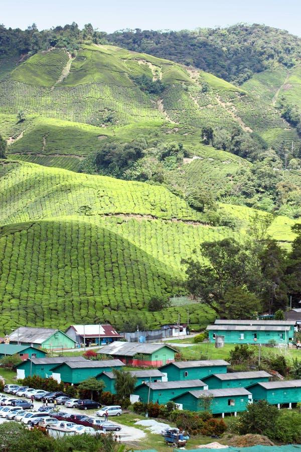02个种植园茶村庄 免版税库存图片
