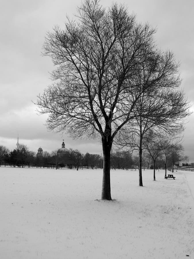 02个结构树冬天 库存图片