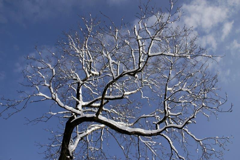 02个结构树冬天 免版税图库摄影
