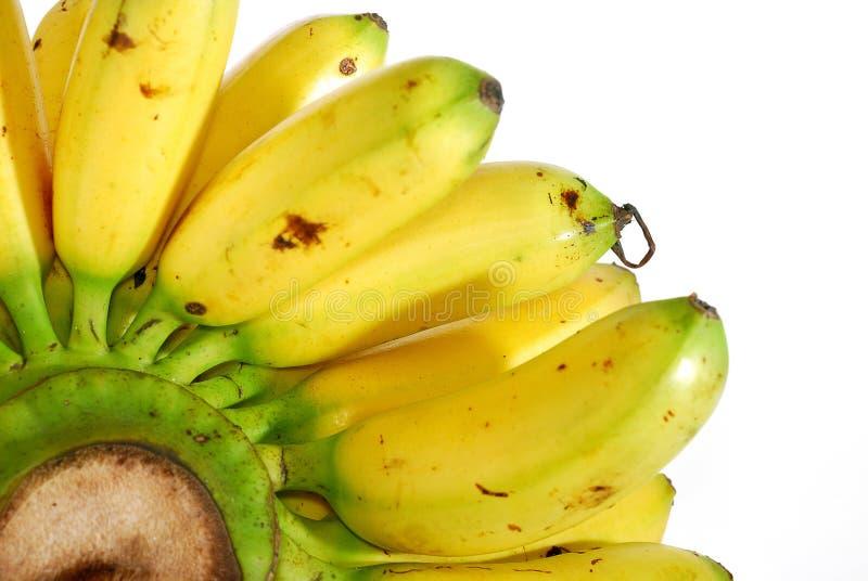 02个香蕉系列 库存照片