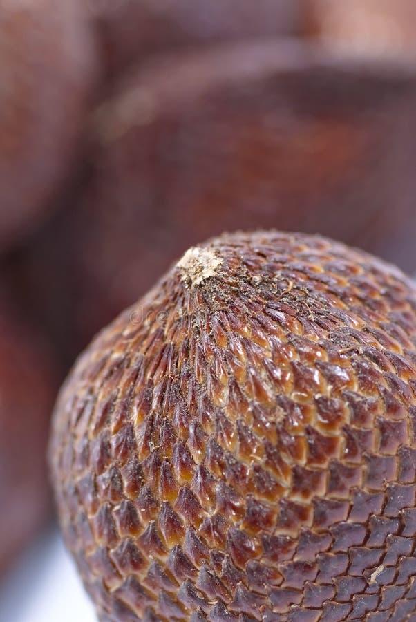 Download 02 σειρές καρπών salak στοκ εικόνες. εικόνα από φυτό - 13181272