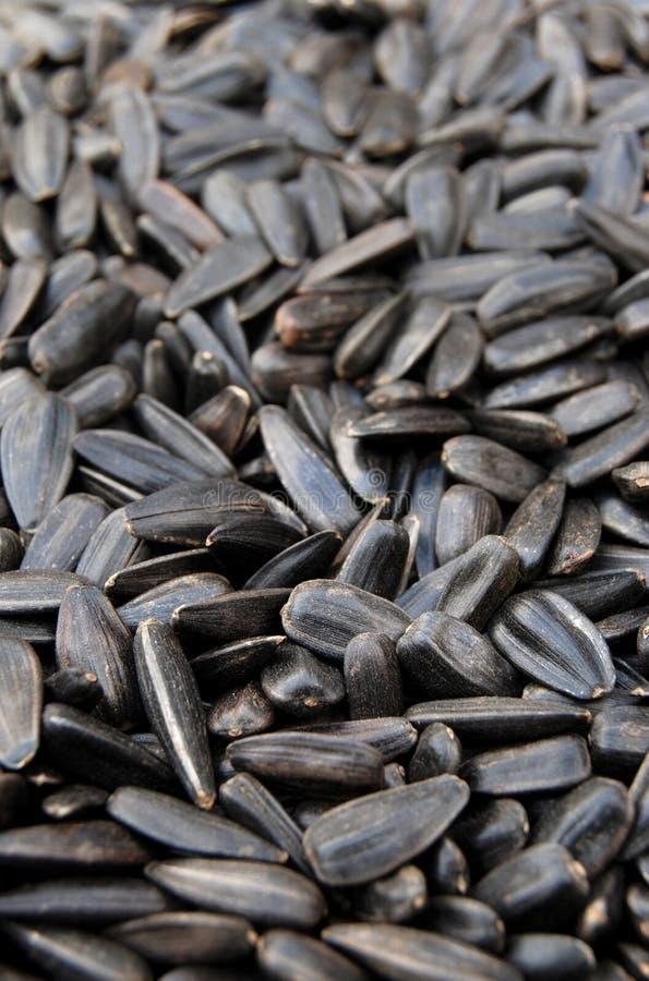 02 nasion słonecznika zdjęcia stock