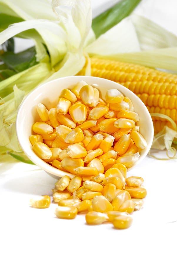 03个玉米系列 库存照片