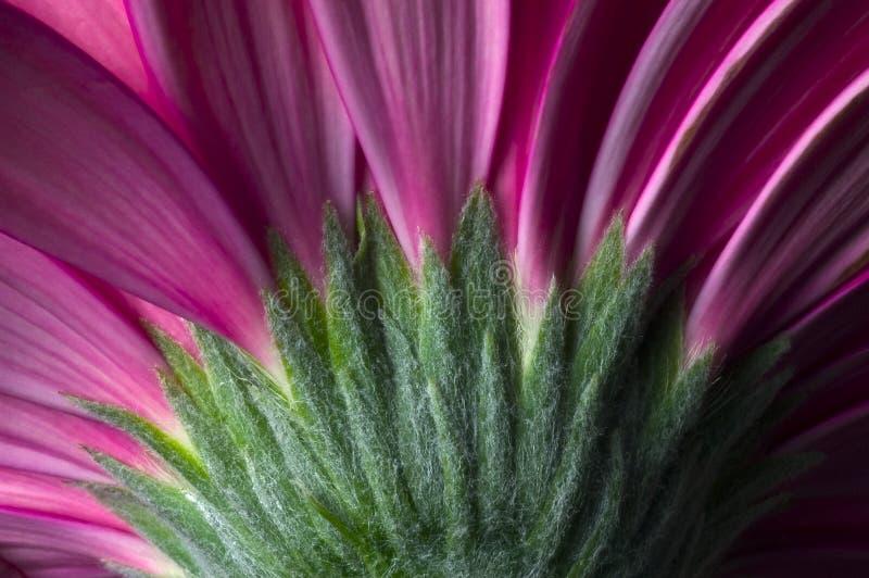 03朵花紫色 库存图片