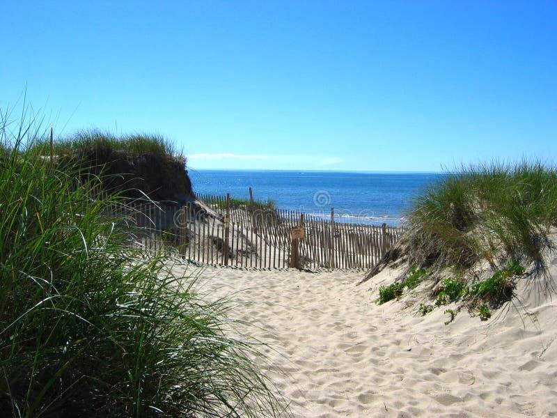 03 cape cod na plaży fotografia royalty free