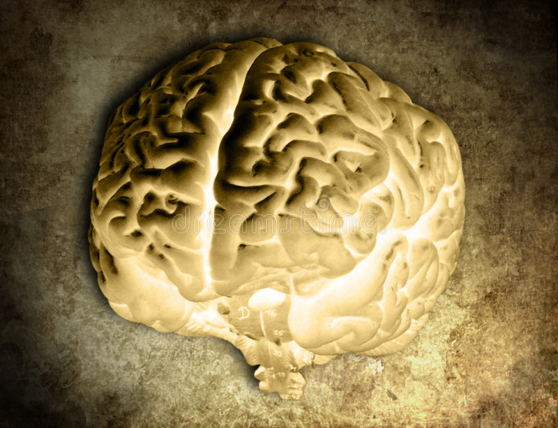 04脑子模型负的 库存图片