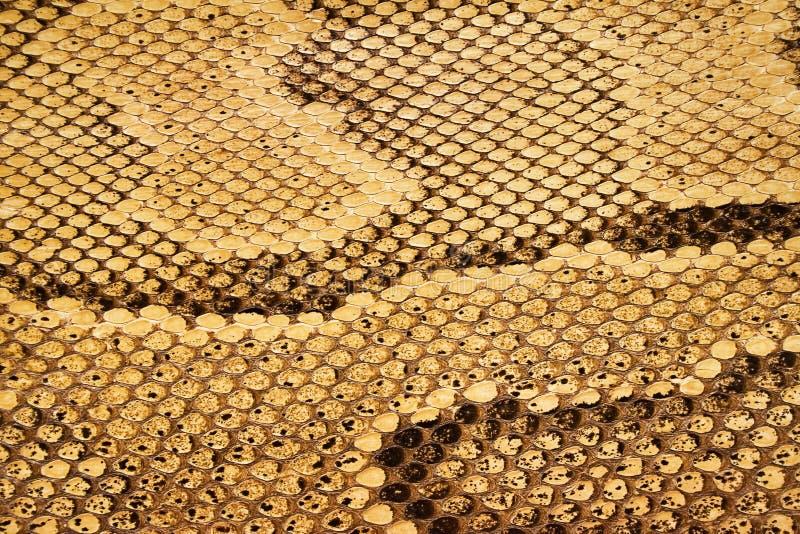 04 текстуры snakeskin стоковое изображение