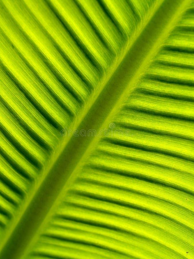 04 bananleaves royaltyfria foton