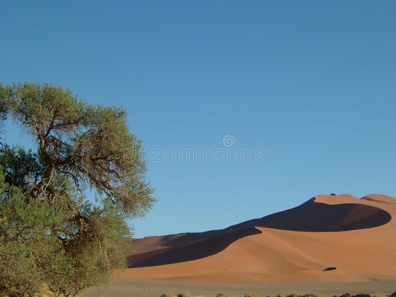 05片沙漠namib 库存图片