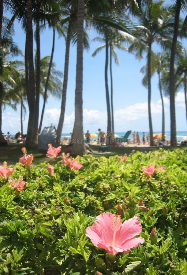 07棵夏威夷木槿 免版税图库摄影