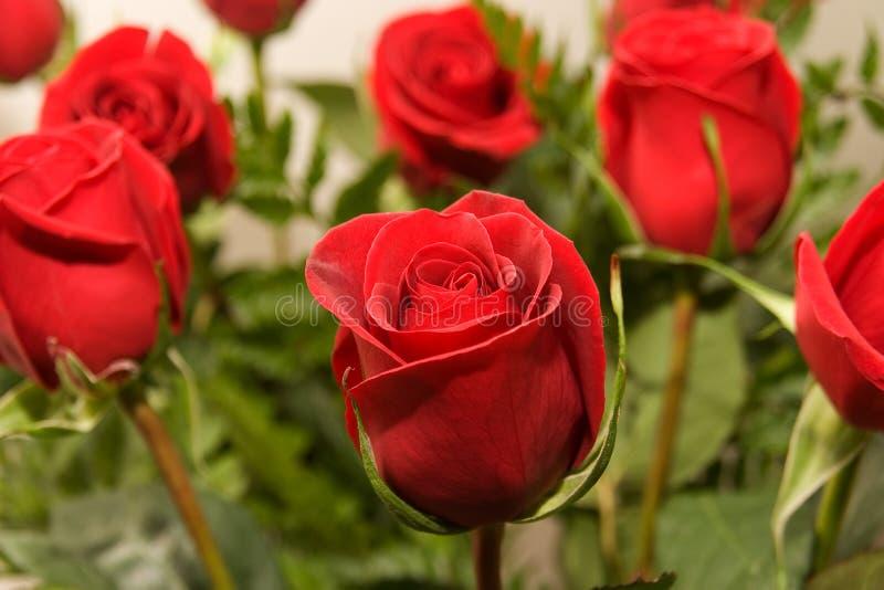 07 цветков подняли стоковое фото