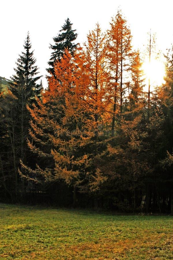07 jesieni fotografia stock
