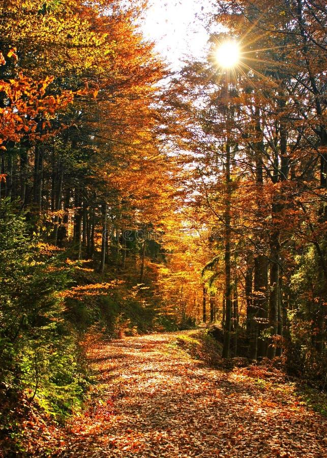 07 jesieni obrazy stock