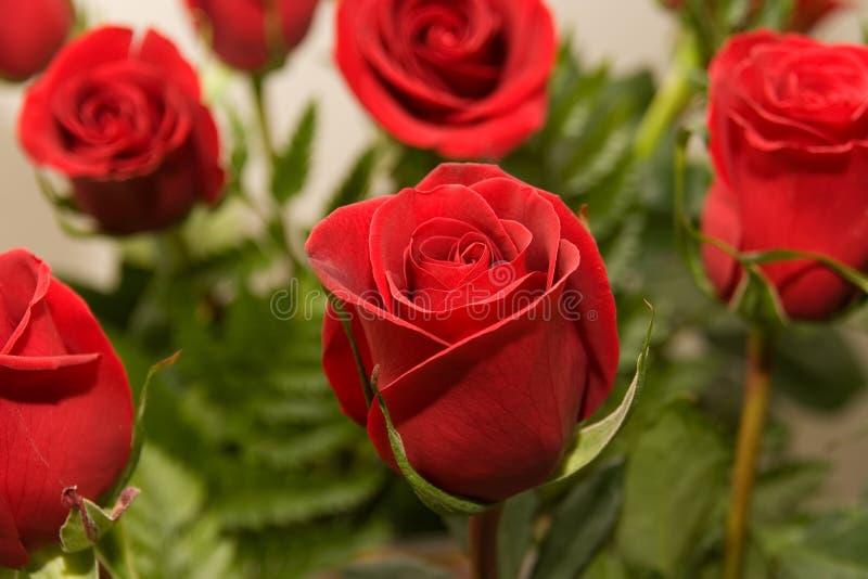 08 цветков подняли стоковое фото