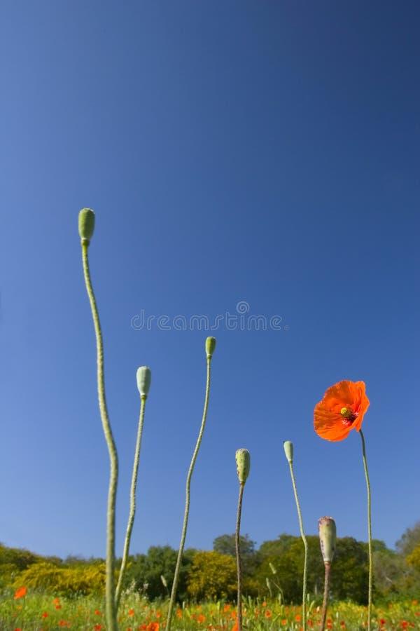09朵花愉快的春天夏天 免版税库存照片