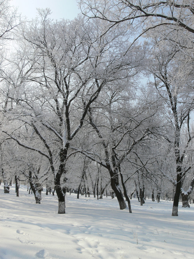 1个公园冬天 库存照片
