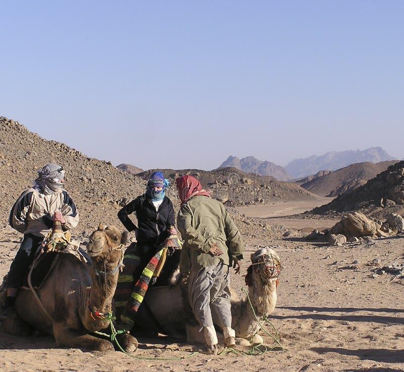 1个骆驼前辈游人 免版税库存照片