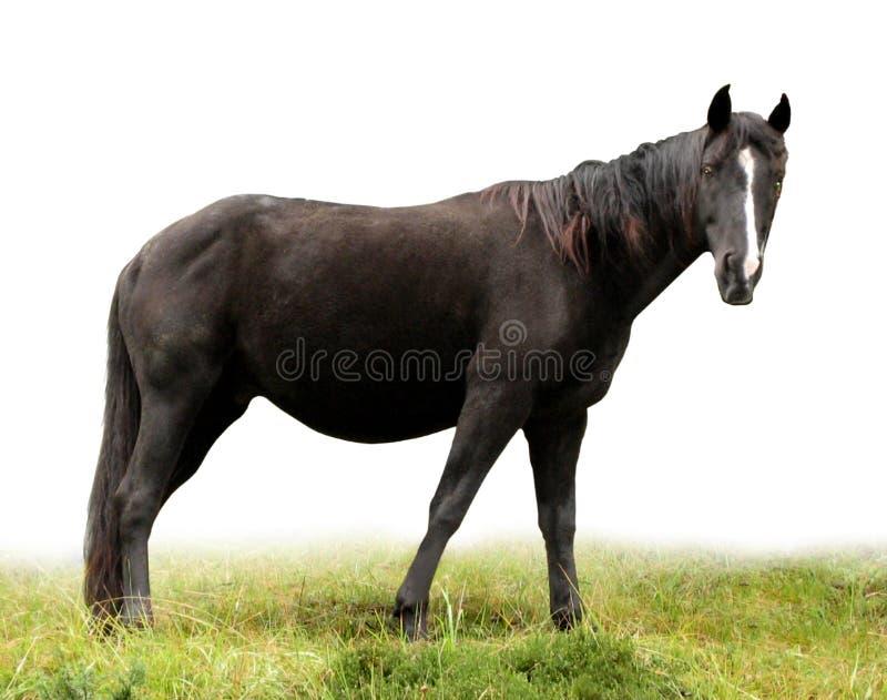 1匹马 库存图片