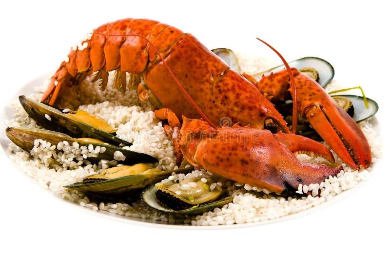 1只龙虾 免版税图库摄影