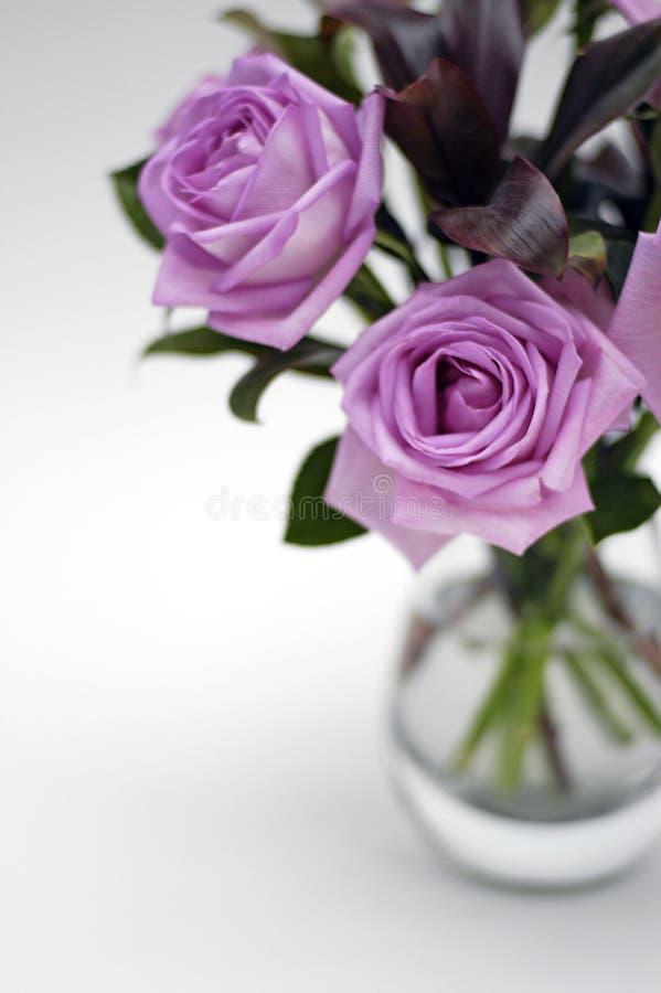1喜怒无常的桃红色玫瑰 免版税库存照片