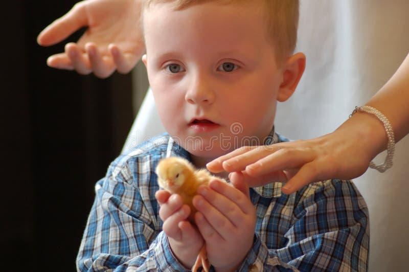 1小鸡复活节 免版税库存图片
